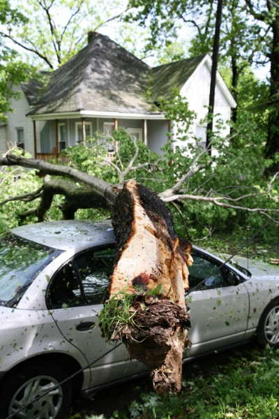 Are Your Drought Stricken Trees Ready For a Hurricane?