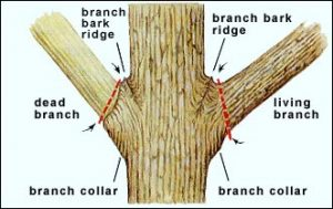 Read more about the article Tree Trimming: How Using The Wrong Techniques Can Destroy Your Trees