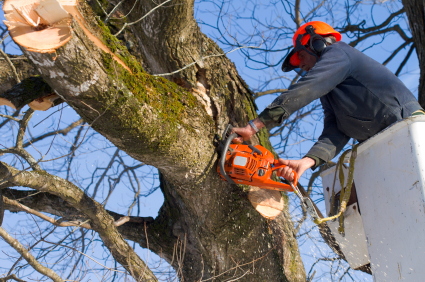 man with chainsaw trimming trees