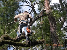 Factors To Consider Before Removing a Tree
