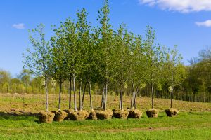 Common Tree Planting Mistakes, Part One