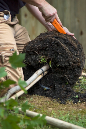 Read more about the article Common Tree Planting Mistakes, Part Three