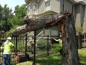 The Dangers of Hazardous Trees