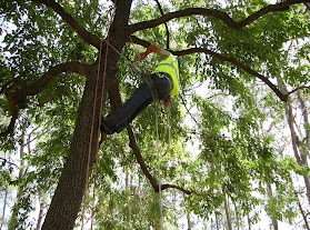 Does Your Tree Care Company Know How To Avoid Electrocution Dangers?