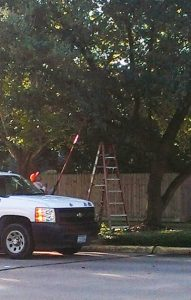 Does Your Basic Landscaper Also Handle Your Tree Trimming?