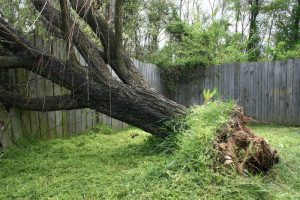 Tree Inspections Can Save Both Trees and Lives