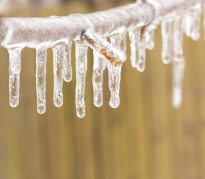 How Does Icy Weather Impact Trees, Lawns and Gardens?