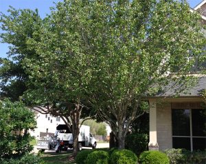 Simple Ways To Care For Your Trees