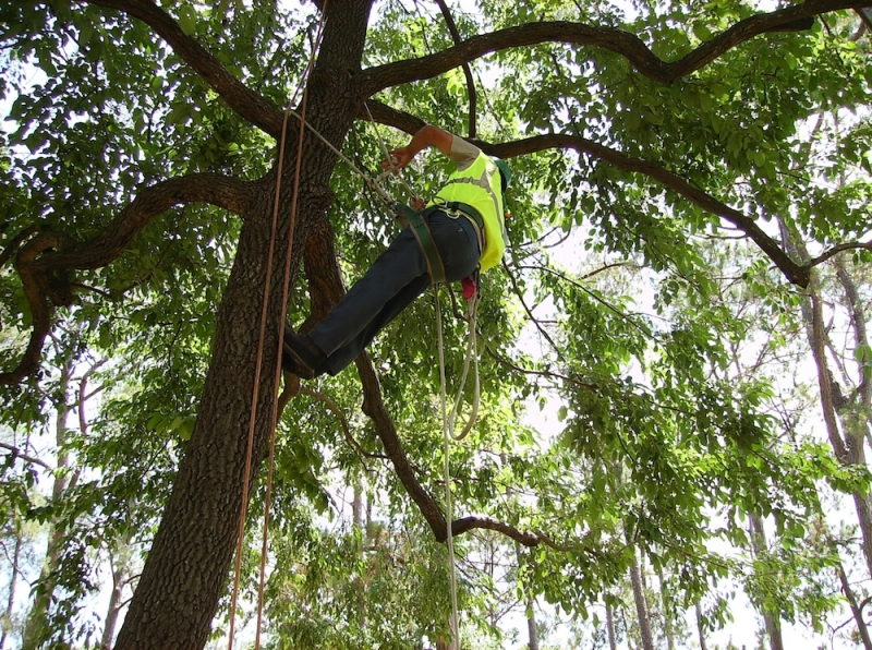 Why Outstanding Safety Practices Matter In Tree Care