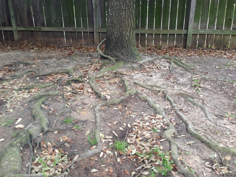 What To Do About Surface Tree Roots