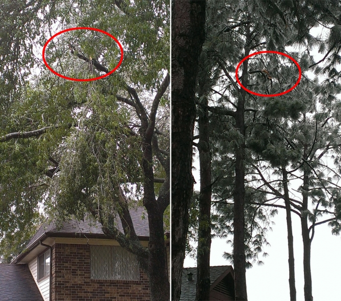 The Many Dangers Of Broken Tree Limbs