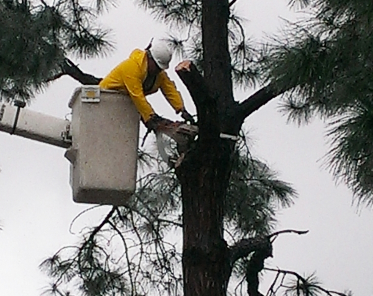 Why Do I Need To Hire A Certified Arborist?