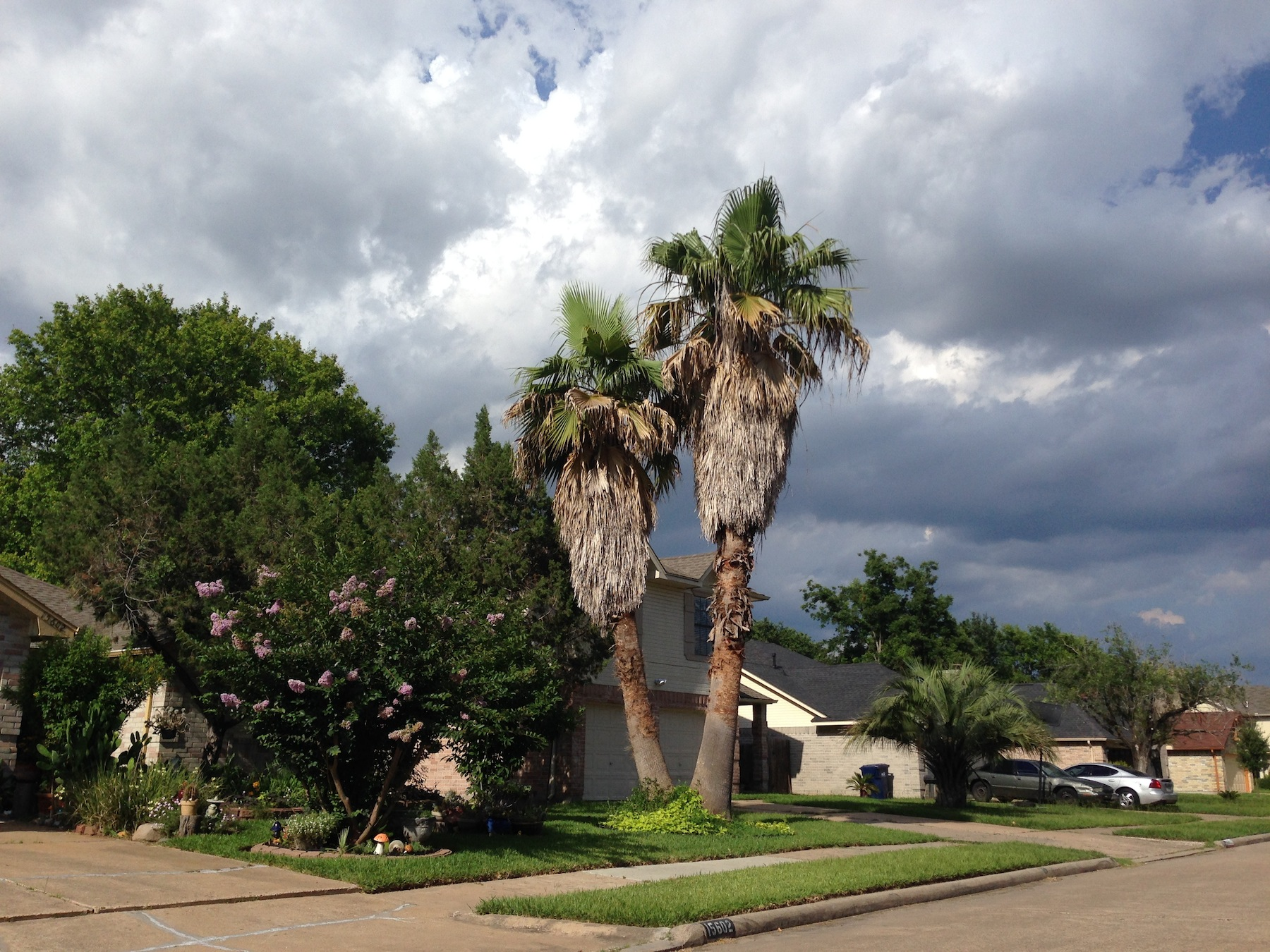 Read more about the article Palm Trees Benefit From Regular Tree Maintenance