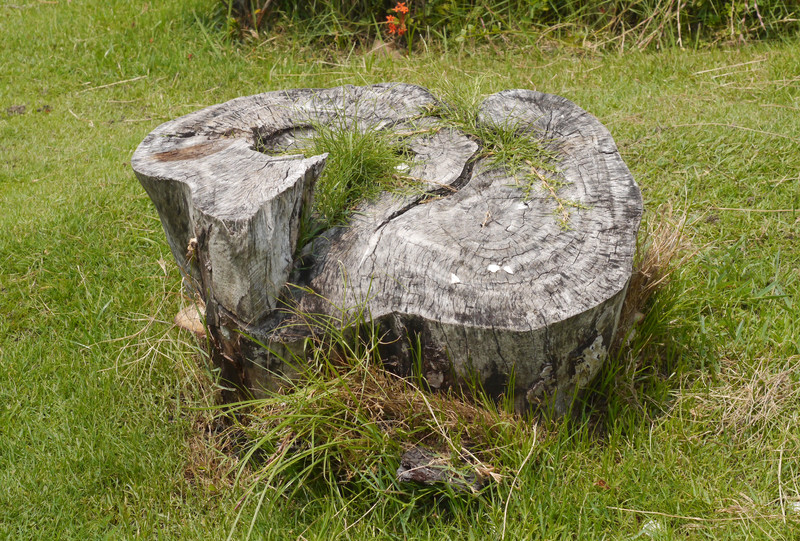 Why You Should Always Have Tree Stumps Removed From Your Property