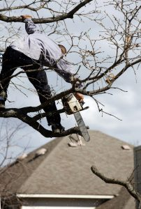 Understanding the Dangers of Tree Trimming
