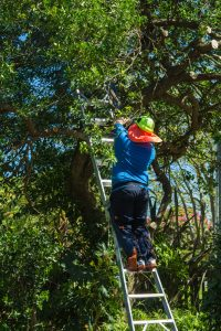 Read more about the article Three Reasons Why Landscape Crews Shouldn't Trim Your Trees
