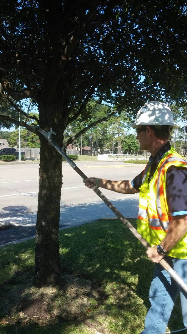 Young Trees Require Strategic and Careful Pruning