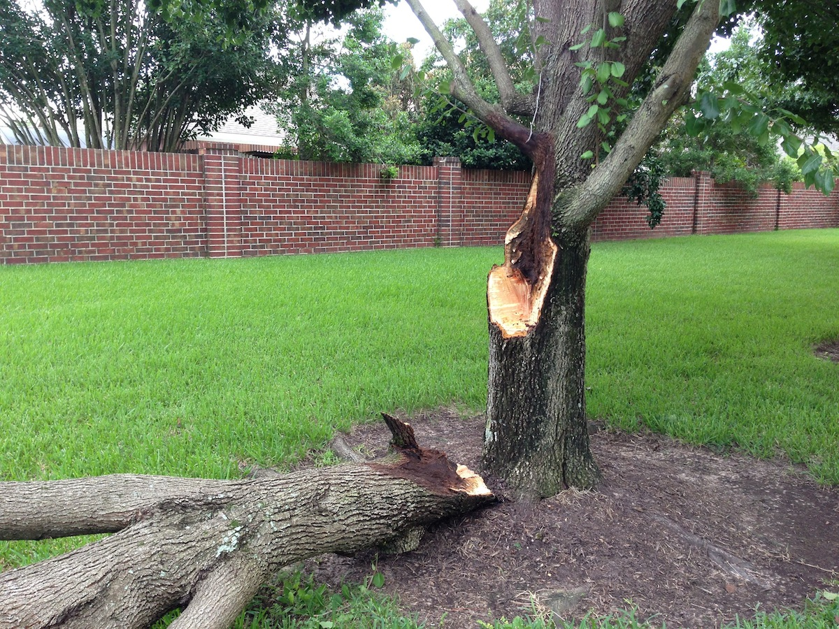 Read more about the article The Best Ways To Help Wounded Trees