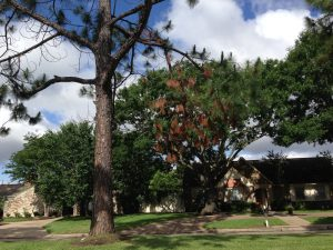Read more about the article The Dangers of Unsafe Trees, Part One