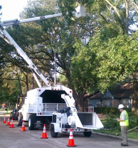 The Importance Of ANSI Compliance In Tree Care