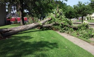 The Dangers of Unsafe Trees, Part Two