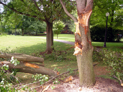 Is My Tree At Risk?