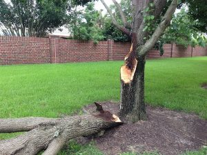 Beware Of These Tree Dangers