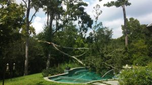 How To Protect Your Trees From Severe Weather