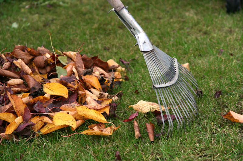 What To Look For When Leaves Fall From Your Trees
