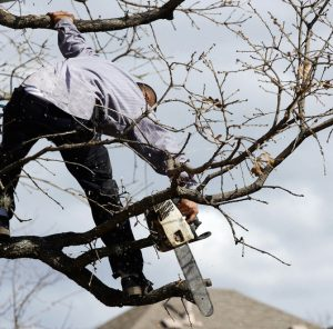 The Five Biggest Risks of Hiring Amateur Tree Crews