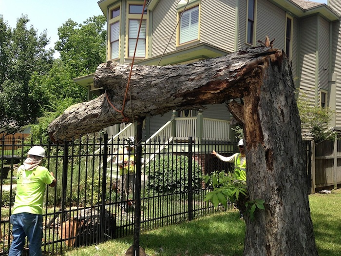 How To Know When A Large Tree Needs Removal