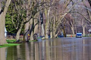 Read more about the article A Closer Look At Common Tree Threats: Flooding