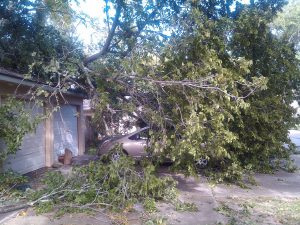 Read more about the article Why Property Owners Should Never Handle Tree Emergencies On Their Own