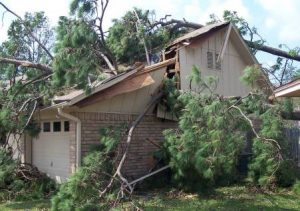 How To Avoid Property Damage From Trees