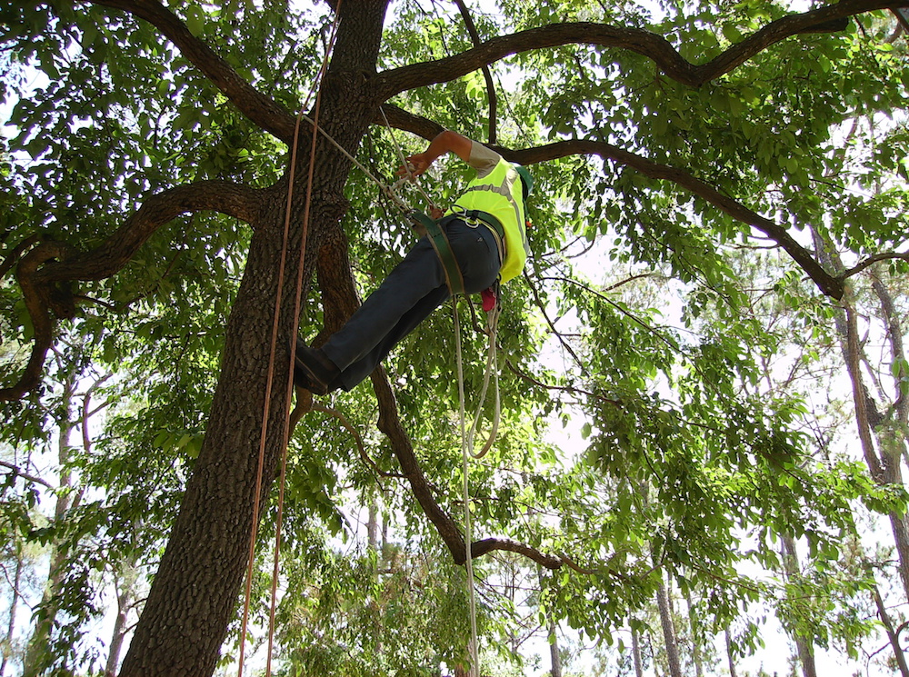 Best Practices in Tree Trimming