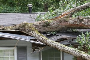 Three Ways Overgrown Trees Can Damage Rooftops