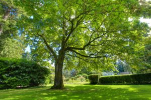 How Tree Pruning Now Can Help Your Property This Summer