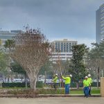 The Proper Way to Trim Crape Myrtles
