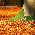 Fall Tree Fertilization