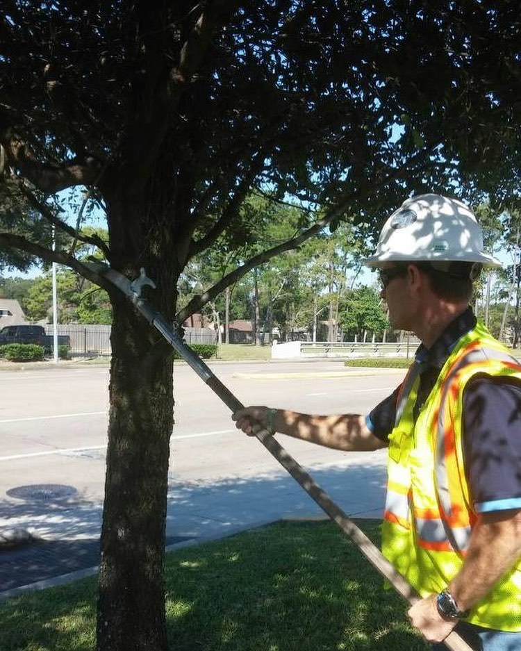 Tree Safety at Embark Service