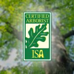 What should you look for when choosing a tree trimming company? What is the significance of using an ISA certified arborist for your tree care?