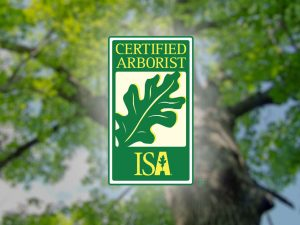 Read more about the article What should you look for when choosing a tree trimming company? What is the significance of using an ISA certified arborist for your tree care?