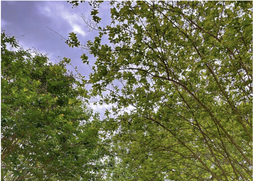 Read more about the article What to Expect Post Freeze from Your Trees and Large Shrubs