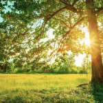 How to Protect Your Trees from the Summer Heat