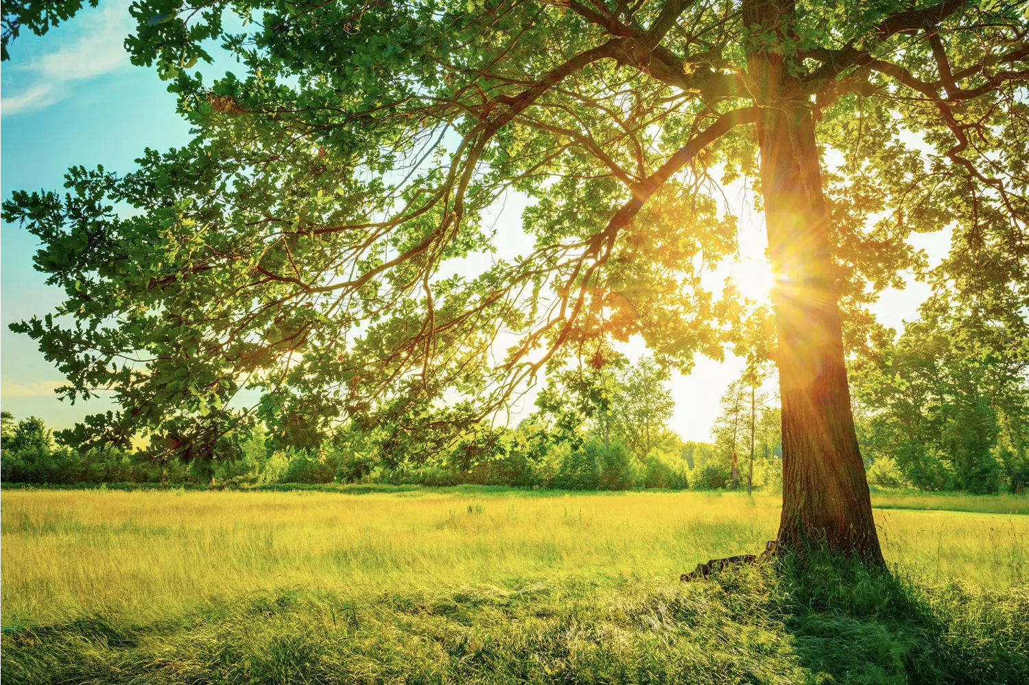 Read more about the article How to Protect Your Trees from the Summer Heat