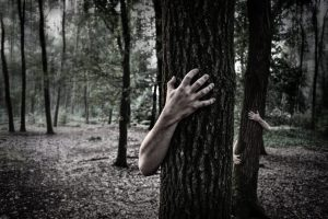 Read more about the article What are the zombie trees everybody's talking about and what can be done about them?