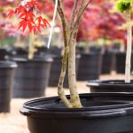 Tips to Pick Out the Right Tree for Your Landscape