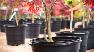 Read more about the article Tips to Pick Out the Right Tree for Your Landscape